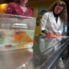 Have you ever accidentally killed a pet fish?